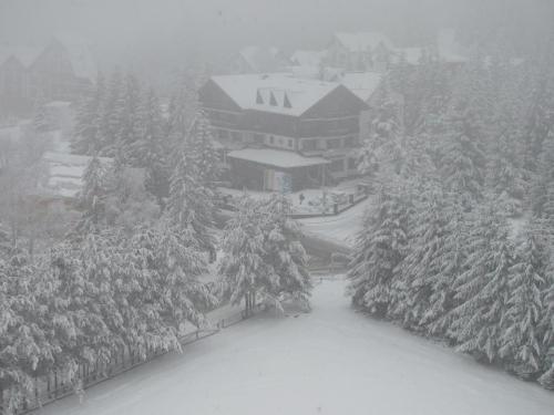 iarna la Poiană